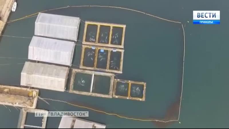 Китовая тюрьма для косаток и белух Вести Приморье
