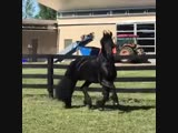 Look at my horse (VHS Video)
