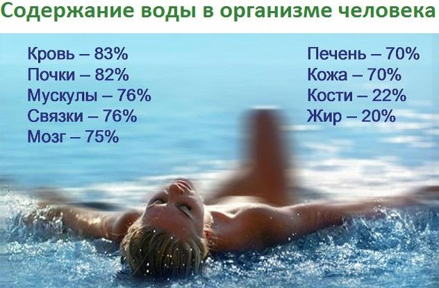 Содержание воды в разных органах человеческого тела