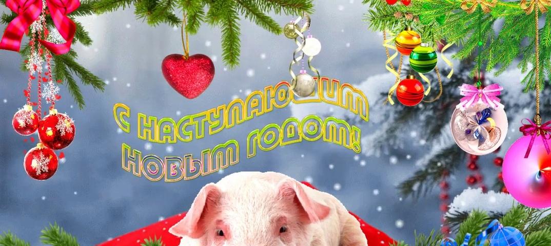 Для друга, картинки смешные с наступающим годом 2019 свиньи