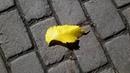 Картинка осень. Природа, лист, осень.