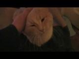 Aria the cat new hit. Ария кота. Новый хит.
