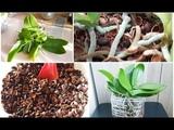Орхидеи в кедровой скорлупе предыстория и шикарный результат