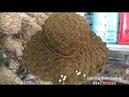 [Crochet] Mũ Sò Sợi Cối (P1) - How to croched summer hat