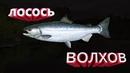 русская рыбалка 4 Лосось на спининг Р.Волхов