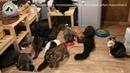 Кошки из приюта три года ждали хозина и он нашелся animal shelter needs help