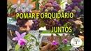 POMAR E ORQUIDÁRIO JUNTOS SERÁ QUE DA CERTO Plantar em Casa
