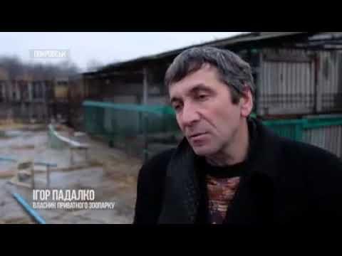 Хищников из Покровска отправят в Киевский зоопарк