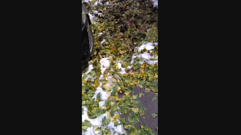 16 ноября 18 а вот и последствия первого снега на моем пути на работу в Манхэттене