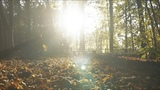 Autumn Leaves (official video) - Eva Cassidy &amp the London Symphony Orchestra