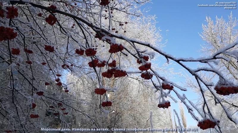 Морозный день. Изморозь на ветвях. Съемка телефоном Samsung Galaxy J5 (Full HD)