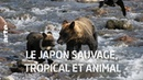 Le Japon Sauvage, tropical et animal | Documentaire complet | ARTE Découverte