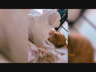 Котей просит прощения у пса