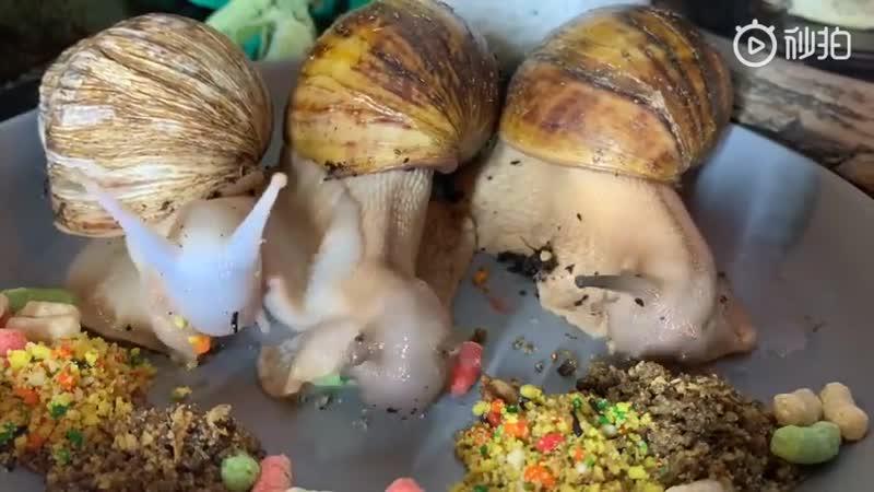 Если вы никогда не видели улиток в буфете In case you've never seen snails at a buffet улитка слизни привет я морская улиточка