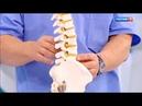Как лечить боль в спине, как гордыня влияет на здоровье, женское здоровье Доктор Мясников