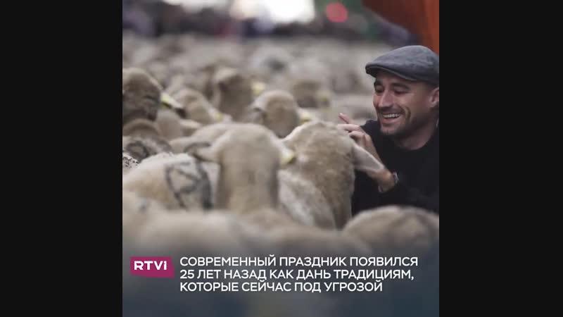 Невероятные приключения овечек в Испании