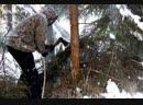 В Курской области черные лесорубы валят многолетние дубы