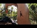 Укрощение скорпиона, или как вылечить ревматизм