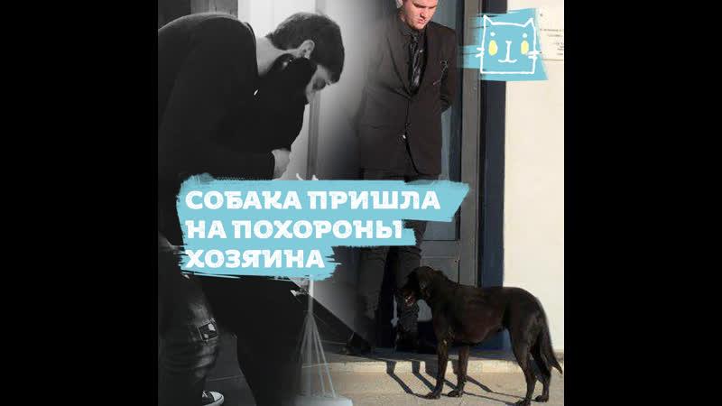 Собака Эмилиано Салы пришла проститься с хозяином