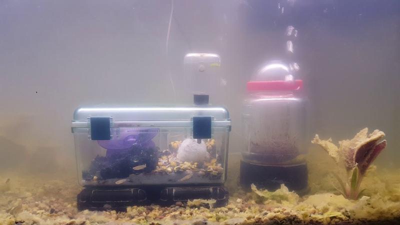 Hampture, September 13th 2017 Fish added!
