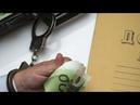 Отмывание денег из России: бизнесмены вывели в Германию миллионы евро