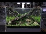 Nature Aquarium Aquascape Tutorial - The ADA Way, By Aquarium Gardens