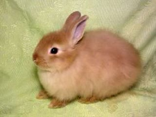 Смешной кролек