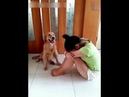 Dog stop his owner to hurt