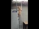 Собака спускается с крыши по лестнице. Видео прикол