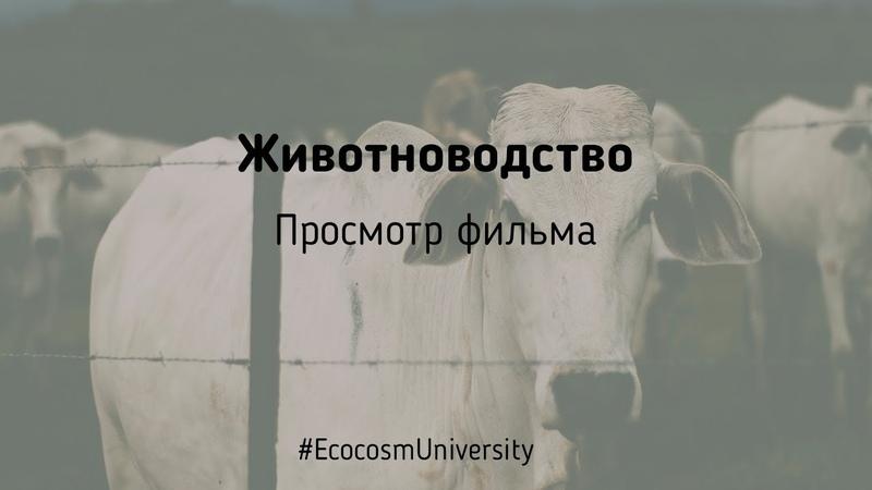 Просмотр фильм об индустриальном животноводстве Скотозаговор