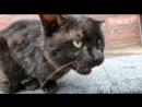 Котик, котик скажи привет (Все мы узбеки)