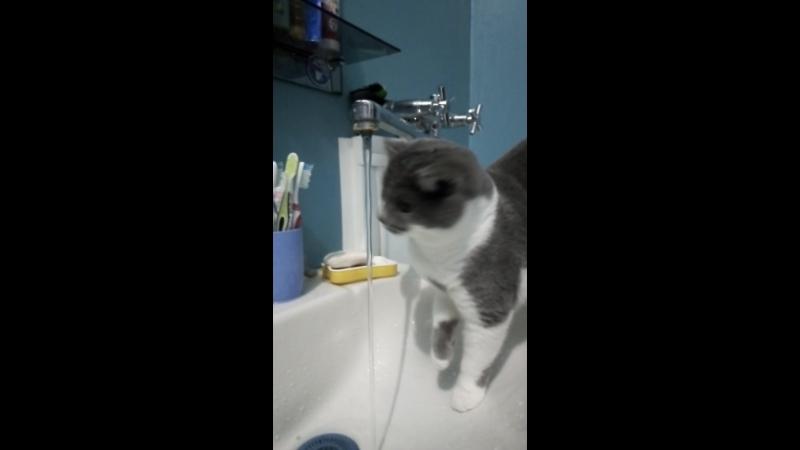 Приколы про нашу кошку