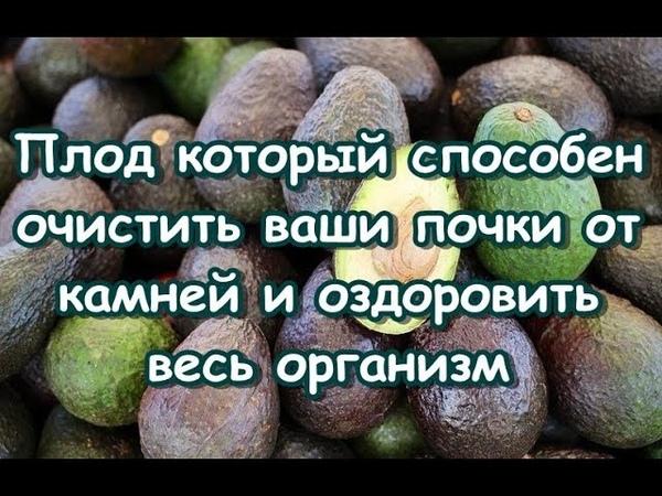 Плод который способен очистить ваши почки от камней и оздоровить весь организм