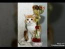 Рыжий кот
