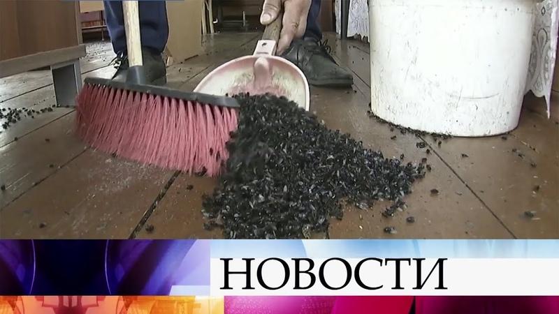 Следователи Свердловской области выясняют причины настоящего нашествия мух на одно из сел.