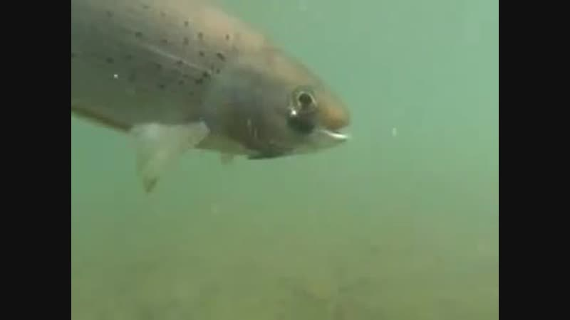 Underwater camera Grayling film