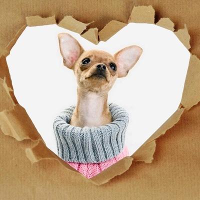 шитьё и вязание одежды для животных вконтакте