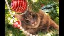 Мы сказали нашей кошке, что будем наряжать ёлку. Ну и дальше вы видите. Украшение — это она.