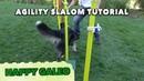 Agility Slalom Tutorial Sport Hundetraining Aussie Clicker