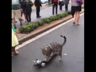 Wonderful Earth - Cat-Boarding
