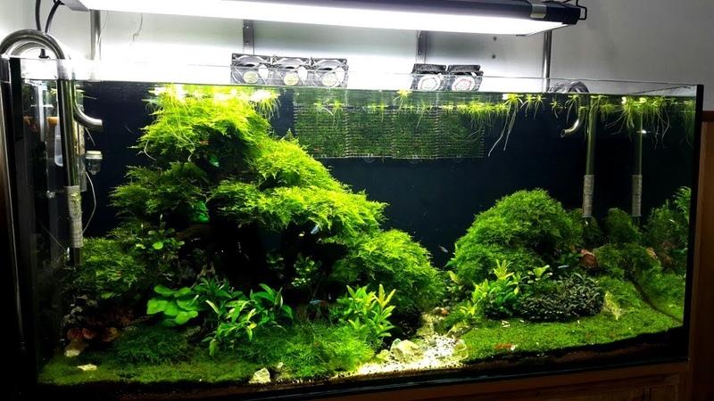 Hồ thủy sinh bố cục Bonsai và rêu minitaiwan cực chất
