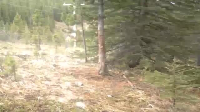 Bear party in the forest