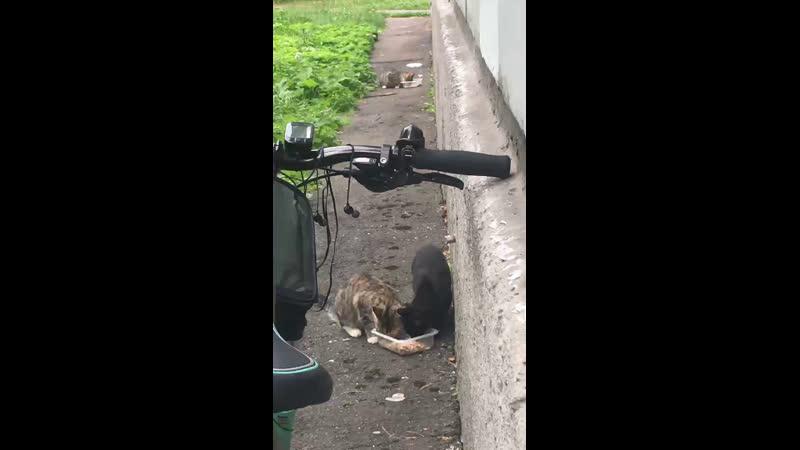 Кормим бездомных котиков часть 2