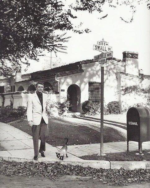 Кэри Грант выгуливает своего кота Беверли-Хиллз, 1955 год#снимки_из_прошлого