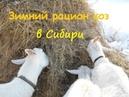 Зимний рацион коз в Сибири Чем мы кормим наших коз