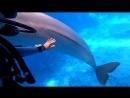 Дайвинг с Дельфинами