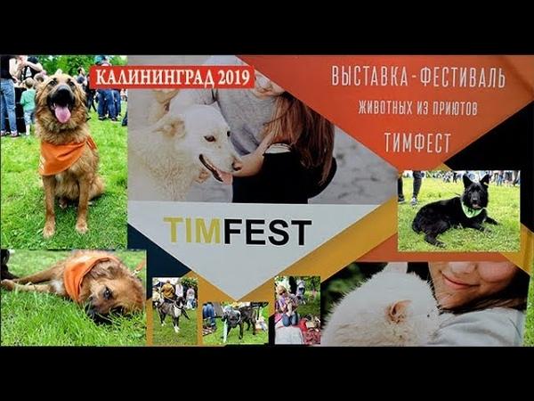 Калининград. Благотворительная выставка-фестиваль собак и кошек из приютов «Тим-фест» 2019)
