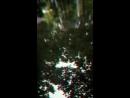 Мелодия темной воды