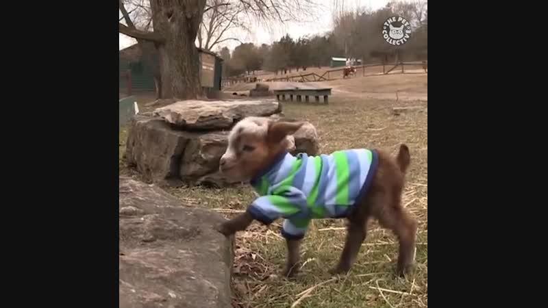 Милые козлята