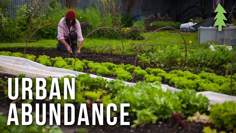 Organic Urban Farming on a 1/2-Acre Property - Urban Abundance